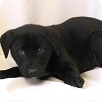 Adopt A Pet :: Ali - Chester Springs, PA