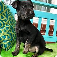 Adopt A Pet :: Pixar - Southington, CT
