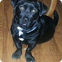 Adopt A Pet :: Buster - Sunset, LA