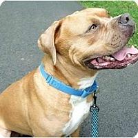 Adopt A Pet :: Rex - Carmel, NY