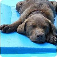 Adopt A Pet :: KoKo - Hagerstown, MD
