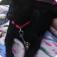 Adopt A Pet :: Lucy - Albert Lea, MN