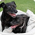 Adopt A Pet :: Louisa