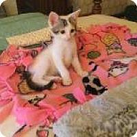 Adopt A Pet :: JOEY - 2015 - Hamilton, NJ