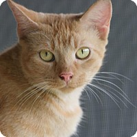 Adopt A Pet :: Spitfire - North Fort Myers, FL