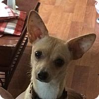 Adopt A Pet :: Chico (2) - Martinez, GA