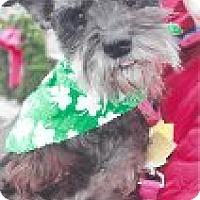 Adopt A Pet :: Savannah~~ADOPTION PENDING - Sharonville, OH