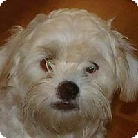 Adopt A Pet :: Buddy - MINNEAPOLIS, KS