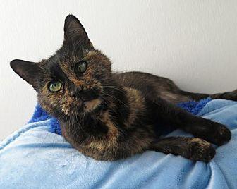 Siamese Cat for adoption in High Point, North Carolina - Marlene