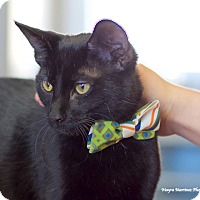 Adopt A Pet :: Schmoopie - Homewood, AL