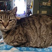 Adopt A Pet :: Stubbs - Benton, PA