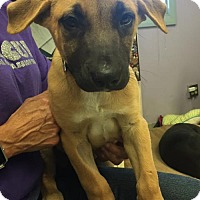 Adopt A Pet :: Camie - Fresno, CA