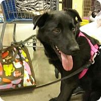 Adopt A Pet :: Inky - Columbus, OH