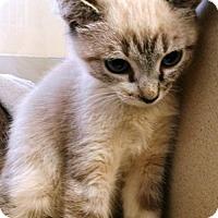 Adopt A Pet :: ABIGAIL - DeLand, FL