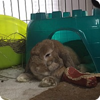 Adopt A Pet :: Pancake and Hawkeye - Williston, FL