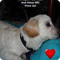 Adopt A Pet :: Nolin - Covina, CA