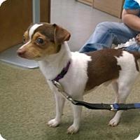 Adopt A Pet :: KRISTOFF - Terre Haute, IN