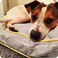 Adopt A Pet :: Liza - Acworth, GA