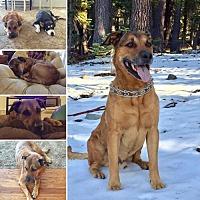 Adopt A Pet :: Dougie - Yreka, CA