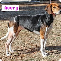 Adopt A Pet :: Avery - Burgaw, NC