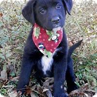 Adopt A Pet :: Mikey - Tyler, TX