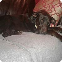 Adopt A Pet :: Buster - Allison Park, PA