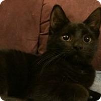 Adopt A Pet :: Mocha - McHenry, IL