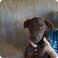 Adopt A Pet :: Link - Oviedo, FL