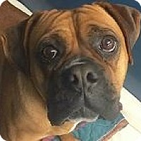 Adopt A Pet :: Elsie - Springdale, AR