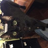 Adopt A Pet :: Prancer - Glendale, AZ