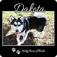 Adopt A Pet :: Dakota - Clearwater, FL