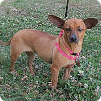 Adopt A Pet :: Winny - Kingwood, TX
