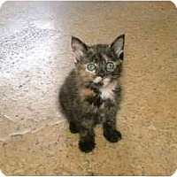Adopt A Pet :: TWIX - Warren, OH
