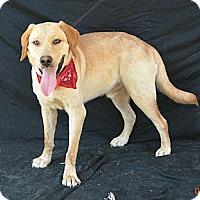 Adopt A Pet :: Harry - Plano, TX