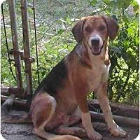 Adopt A Pet :: Ken - Albany, NY