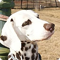 Adopt A Pet :: Max - Newcastle, OK