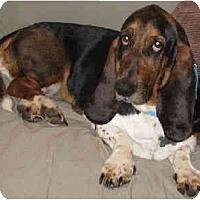 Adopt A Pet :: Amiee - Phoenix, AZ