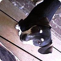 Adopt A Pet :: Benny - Rancho Cordova, CA