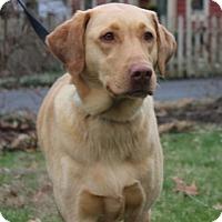 Adopt A Pet :: Skye - Cincinnati, OH