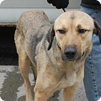 Adopt A Pet :: Eva - Brooklyn, NY