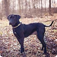 Adopt A Pet :: Gwennie - Lewisville, IN