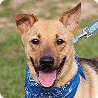 Adopt A Pet :: Caitlin - San Francisco, CA