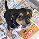 Adopt A Pet :: Hilo