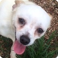 Adopt A Pet :: Clarence Colgin - Houston, TX