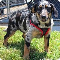 Adopt A Pet :: Willow - Danbury, CT