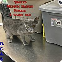 Adopt A Pet :: B-10 Jingles - Triadelphia, WV