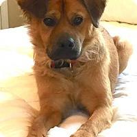 Adopt A Pet :: Benni - Alpharetta, GA