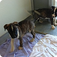 Adopt A Pet :: PUPPIES - Sandusky, OH