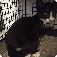 Adopt A Pet :: Thomas - Forest Hills, NY