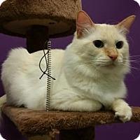 Adopt A Pet :: Balthazar (& Jace) - Herndon, VA